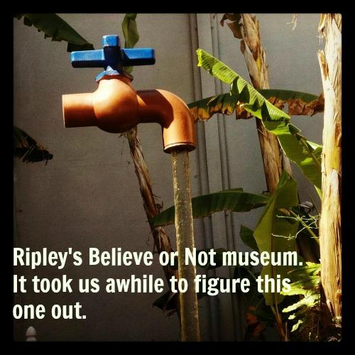 ripleys water faucet
