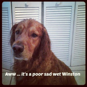 rainy day winston
