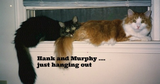 hank and murphy on the windowsill